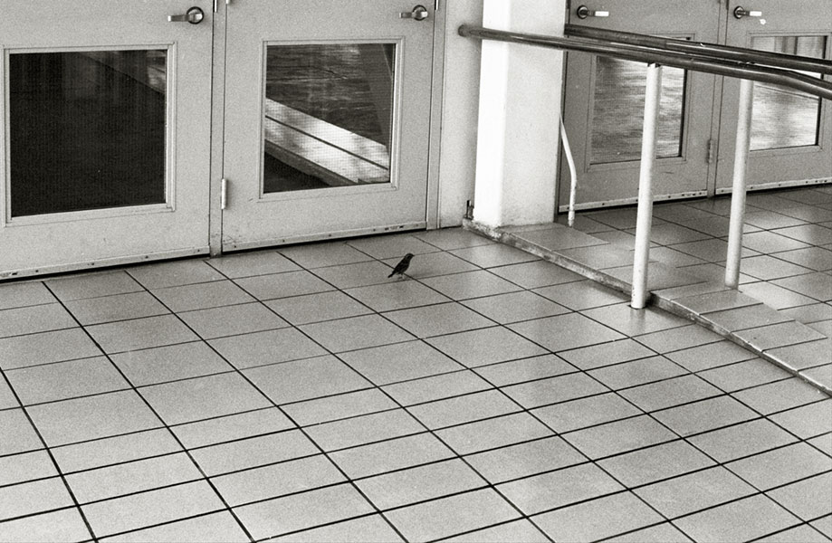 a lonely little birdy