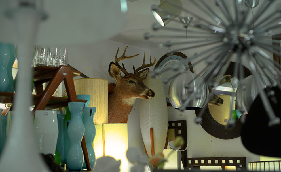 deer in the ceiling lights
