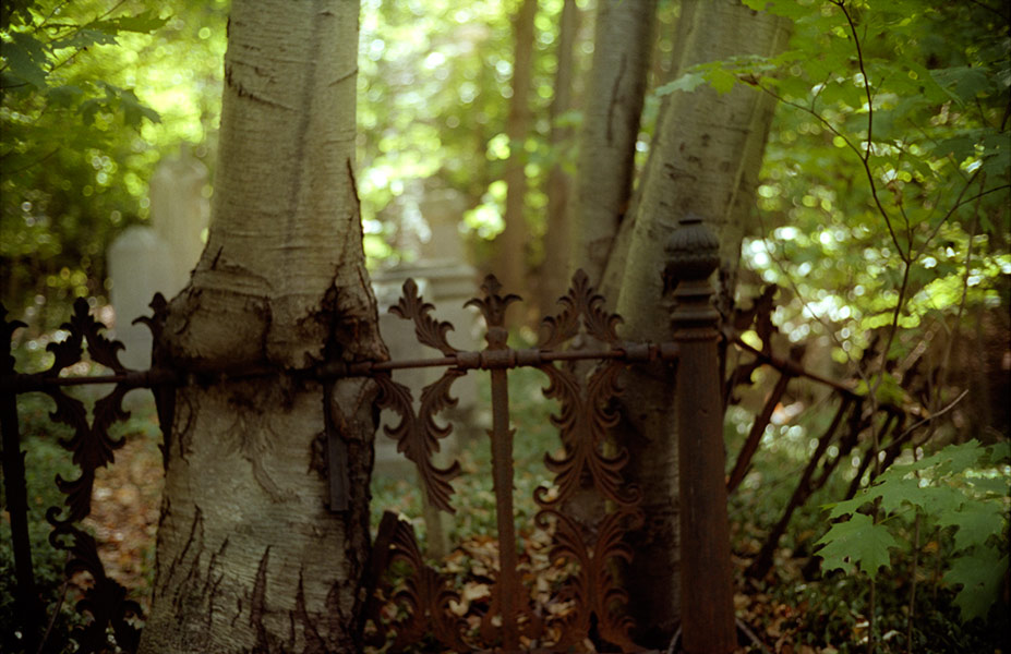 cemetery fence and tree