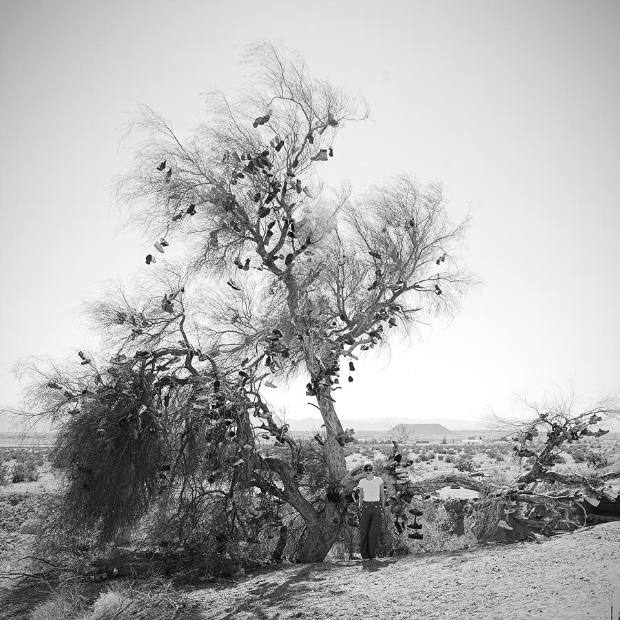 shoe tree, amboy